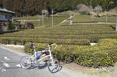 奥久慈茶の茶畑